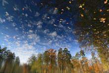Autumn Landscape On The Surfac...