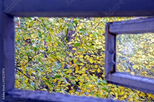 Fotografie, Obraz  Открытая деревянная форточка во двор с ветками и жёлто зелёными листьями