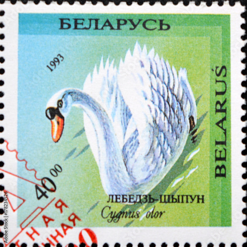 Poster  Old postage stamp with the image of Cygnus olor