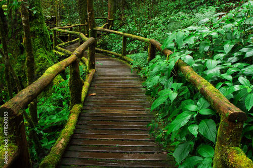Tuinposter Weg in bos Beautiful wooden pathway toward to deep green forest at Inthanon nature park, Chiang Mai. North Thailand