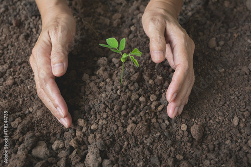 Spoed Foto op Canvas Planten Human hands holding green small plant life concept.Ecology concept.