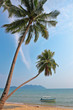 Coconut palm and boat on a tropical beach