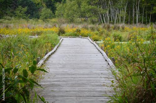 Foto Boardwalk in the wetland