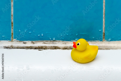 Fotografia, Obraz mold in bath, a duck toy, bathroom