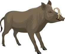 Vector Endemic North Sulawesi Babirusa Illustration