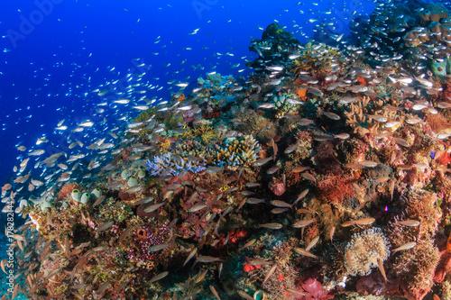 Plakat Tropikalna ryba i zdrowi korale na tropikalnej rafie koralowa