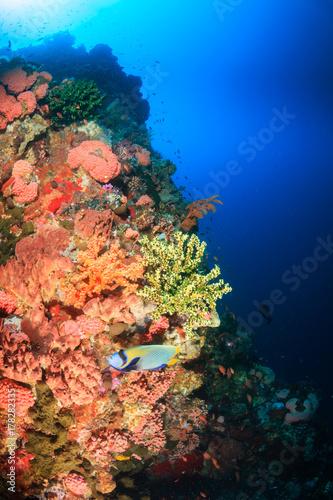 Plakat Tropikalna ryba pływać wzdłuż rafy koralowej ściany w czystej wodzie