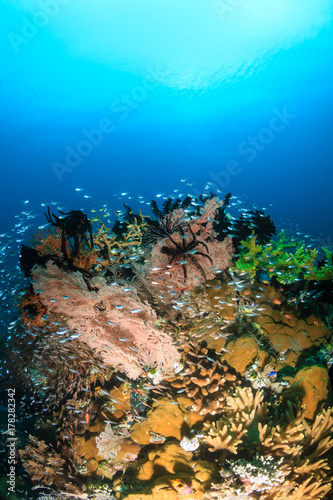 Plakat Tropikalna ryba roi się wokół kolorowej, zdrowej tropikalnej rafy koralowej