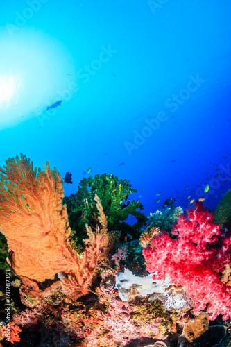 Obraz na dibondzie (fotoboard) Kolorowa, kwitnąca tropikalna rafa koralowa