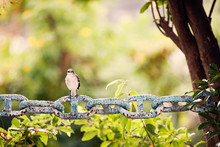 Small Bird Sitting Leisurly On...
