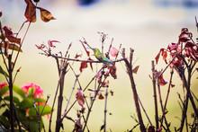Hummingbird Sitting On A Small Branch