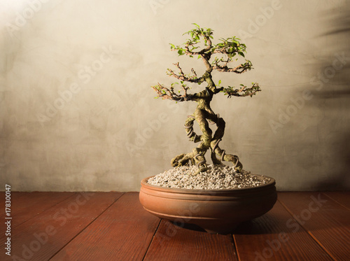 Photo Stands Bonsai Traditional japanese bonsai