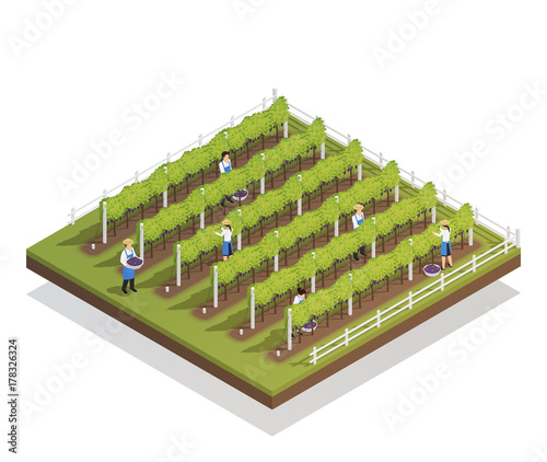 Viticulture Isometric Composition Wallpaper Mural