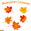 Beautiful leaves - symbol of autumn. Yellow and red autumn leaves maple leaves. Autumn leaf isolated on white background. Vector illustration.