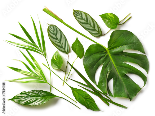 Poster  various tropical leaves