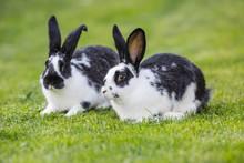 Rabbit. Cute Rabbit Bunny On T...