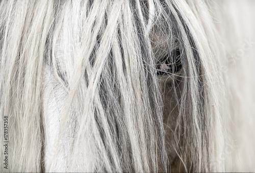 horse Canvas-taulu
