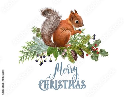 Fotografía Winter squirrel composition