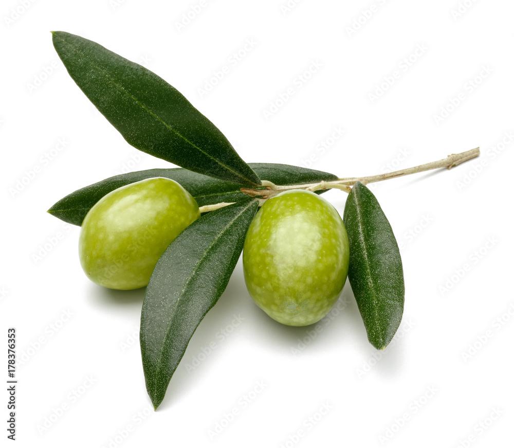 Fototapety, obrazy: Olive