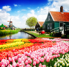 Rural Dutch Scenery Of Small Old Houses And Canal In Zaanse Schans,, Netherlands With Tulip Flowers
