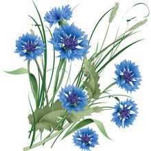 Bouquet Bunch Of Blue Cornflowers Wildflowers With Green Leaves.