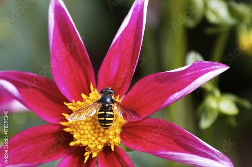 Plakat Pracowita pszczółka