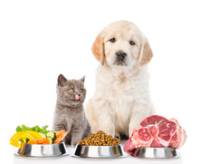 Golden Retriever And A Licking Kitten With Food For Pets. Isolated On White Background