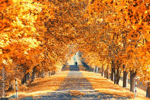 Keuken foto achterwand Oranje eclat Bäume mit bunten Blättern - Herbstallee