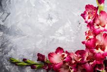 Pink Gladiolus Flower On Grey ...