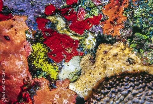 Foto auf AluDibond Weinlese-Plakat Caribbean coral reef