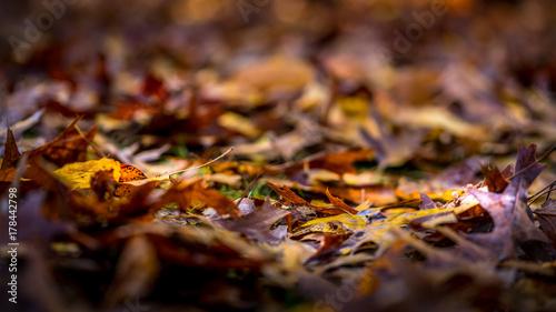 Foto op Plexiglas Bruin Fallen Leaves Decaying on the Canopy Floor