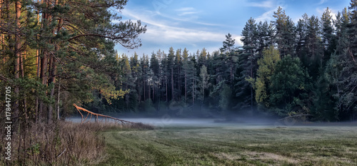 the fog melts in a clearing in a pine forest