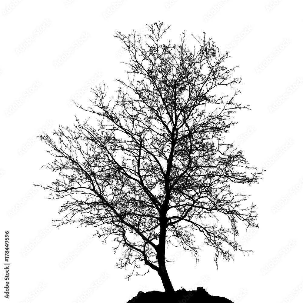 Realistic birch tree silhouette (Vector illustration).ai10