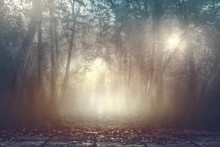 Calmness Misty Spooky Woods Wi...