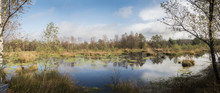 Panorma Of A Beautiful Moor Landscape In The Lueneburger Heide