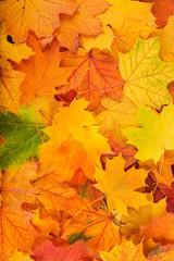Naklejka na ściany i meble Autumn