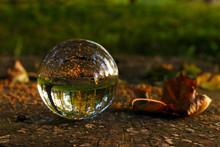 Photo For Illustration Autumn