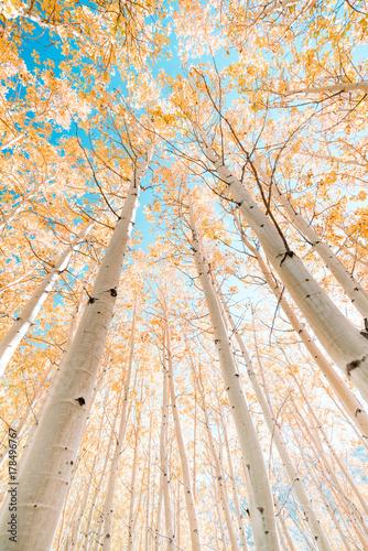 Autumn Color Perfection - 178496767