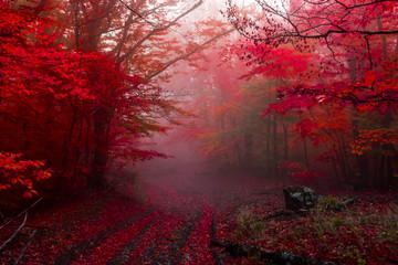 jesienny las 5