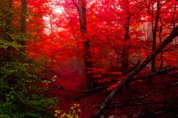 Obraz na Szkle Do restauracji autumn forest 4