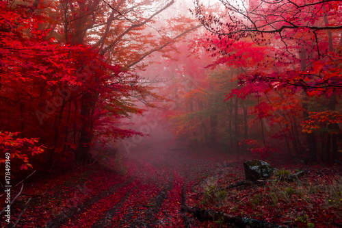 autumn forest 5