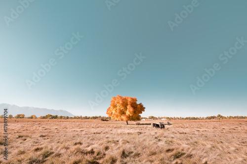 Foto op Canvas Zalm Iconic Autumn Tree Minimalism