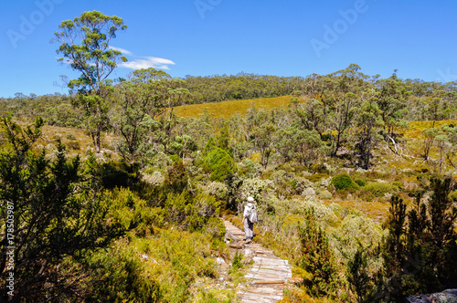 Dove Canyon and Enchanted Forest Walk is a scenic bushwalk in the Cradle Mountai Canvas-taulu