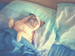canvas print picture - Cute pug dog sleep rest in the bed, wrap with blanket and tongue sticking out in the lazy time