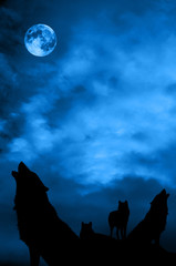 Wolves pack with Moon over night blue sky