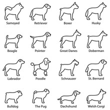 Dogs Breed Set. Linear Design. Dog Side View. Line With Editable Stroke. Collection Of Dog Breeds Such As: Bulldog, Pug, Samoyed, Husky, Labrador, Poodle, Doberman , Boxer, Welsh Corgi And More.