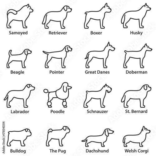 Foto  Dogs breed set