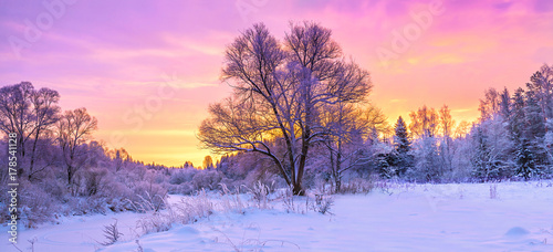 Garden Poster Light pink winter panorama landscape with forest, trees covered snow and sunrise.