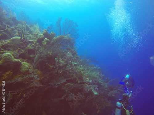 Obraz na dibondzie (fotoboard) Nurkowie nurkujący w Half Moon Reef, Belize