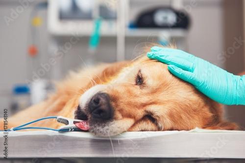 Dog in the animal hospital Wallpaper Mural